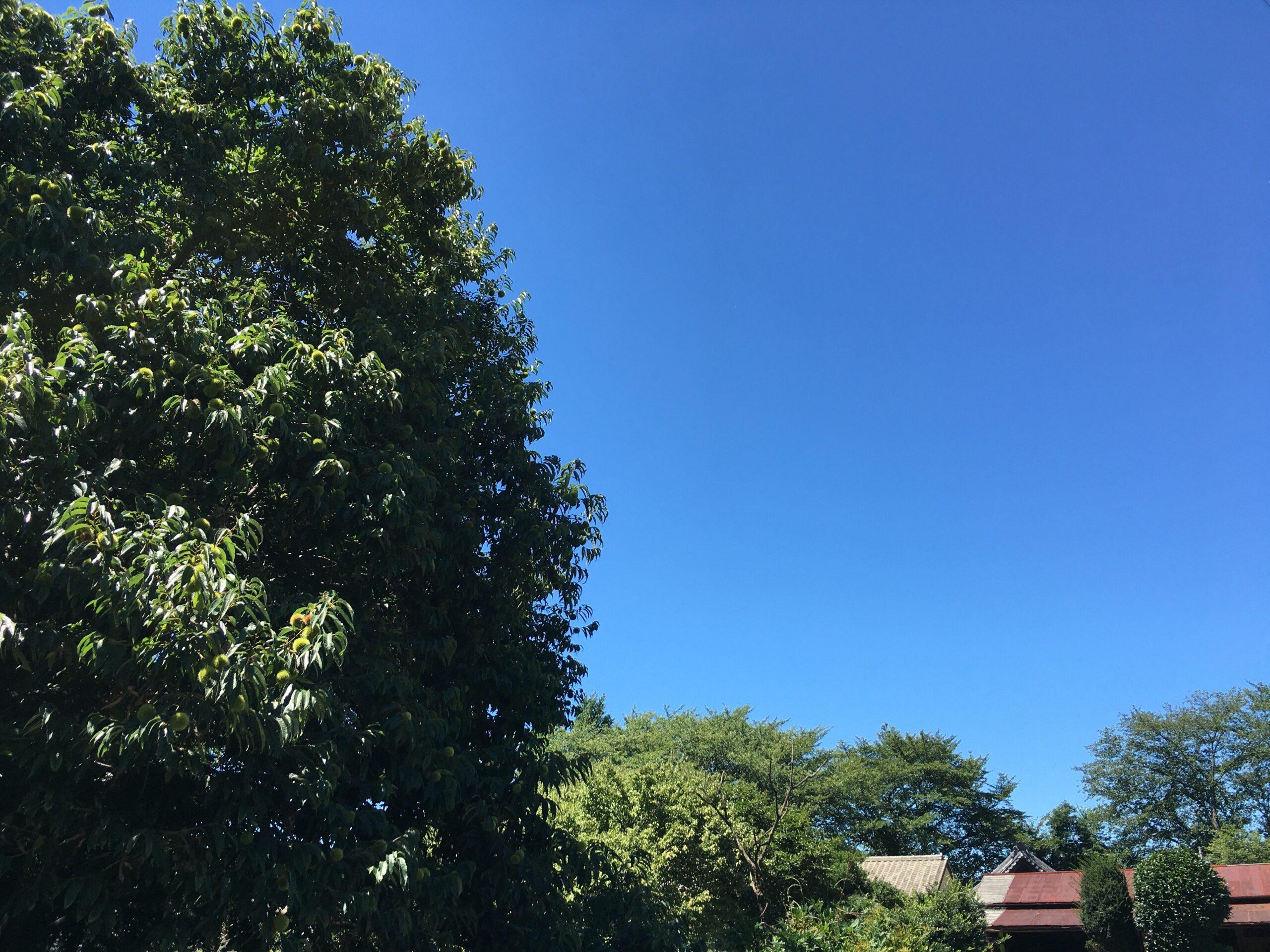 今日は暑くなりそうです。